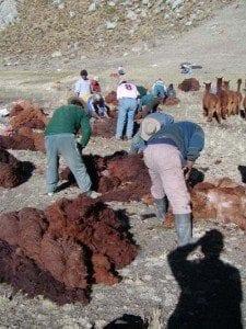 Alpaca history