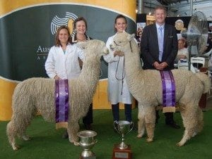 Alpaca judge
