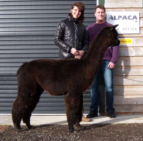 quality line alpacas
