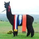 Inca Flagship