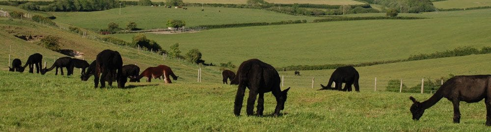 Alpacas offer a great lifestyle and investment