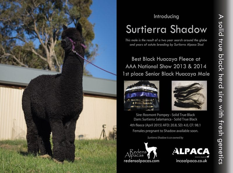 Surtierra Shadow
