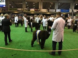 Black-champs-at-2016-BAS-NAtional-Show-web